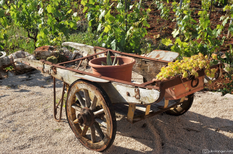 Wine, olive & heritage festival Jelsa 2019.