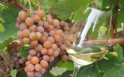 Promocija lokalnih vinara na inicijativu TZ Zagrebačke županije