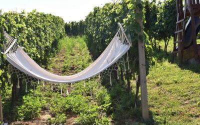 In Cultura Veritas: Okus vina – dodir baštine!