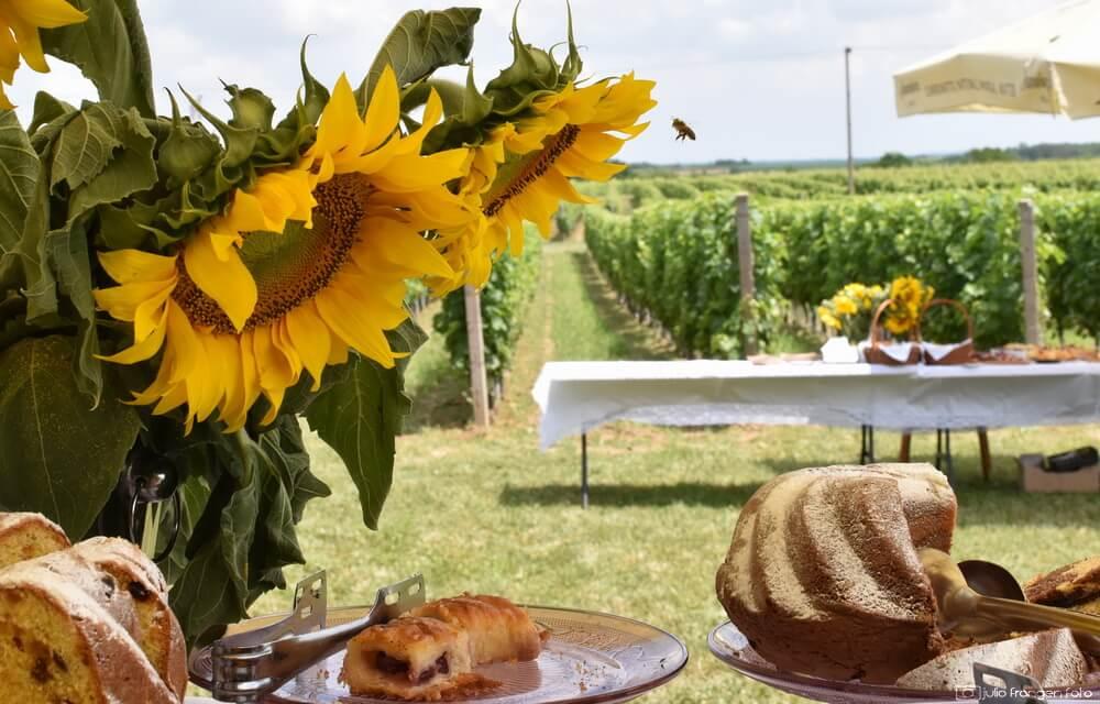 Pjenušavi srijemski doručak u vinogradima vinarije Papak!