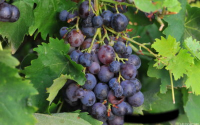 26.09.2020. – Dan vinskog turizma u Srbiji!