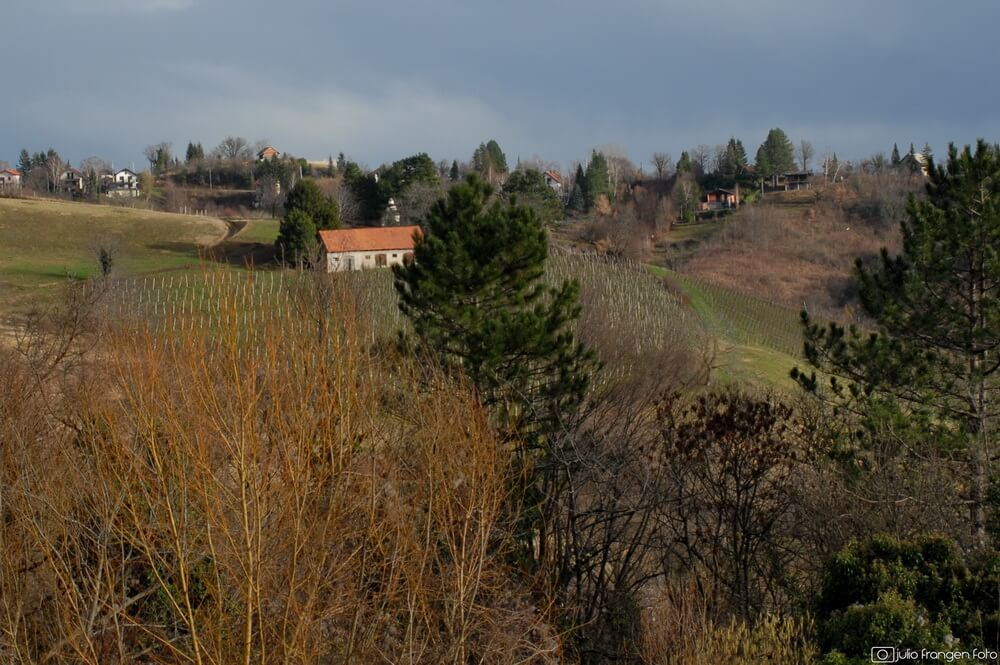 Vinski izlet na Plešivicu – Agro Damir Drago Režek