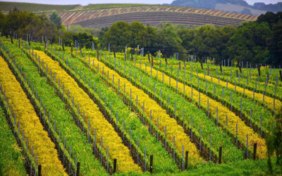 Poziv studentima agronomije na prijavu stručne prakse u Kaliforniji!