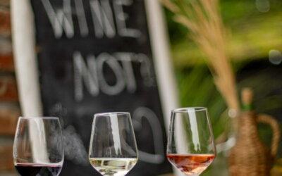 Novi vinski festival – Slavonija i Podravina wine not!?