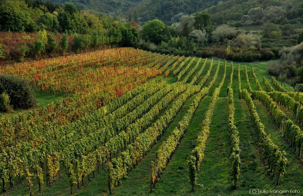 Via VINO – idealna prilika za jesenski posjet vinogradima!
